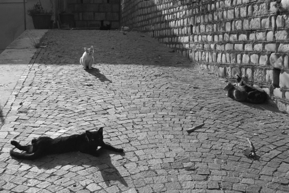 Gatti al sole - Foto selezionata per il NikonContest del 2009. Scattata a Sant'Angelo dei Lombardi AV.